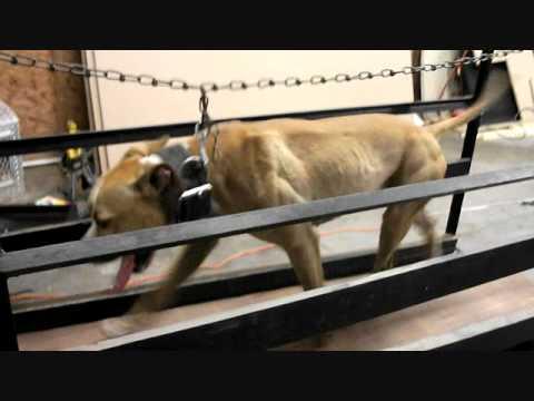 T-MACK'S GARGOLA (2XW) PURE BLACKROCKS MEXICO ELI | FunnyDog TV