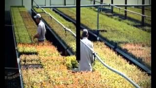 Hugo Sigman - Planta impregnadora Pomera Maderas