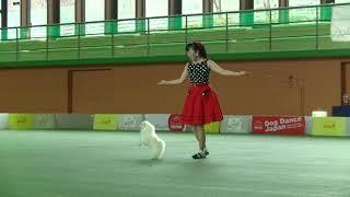 2018 Autumn Dog Dance Japan Funshow  Miu @ Maltese