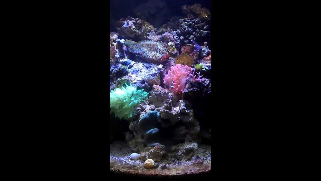 Sera marin 130 meerwasser aquarium 72w bridgelux led youtube for Sera aquarium