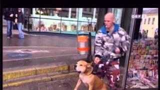 ORF Doku Hunde Am Schauplatz 4/4
