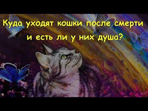 Куда уходят кошки после смерти и есть ли у них душа Where do cats go after death