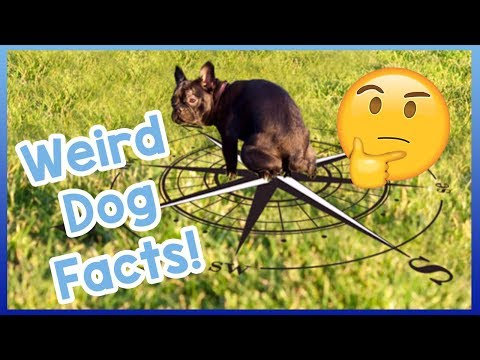 10-weird-dog-facts!-the-most-bizarre-dog-facts-you've-never-heard!