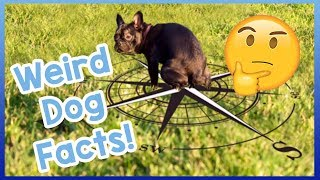 10 Weird Dog Facts! The Most Bizarre Dog Facts You've Never Heard! ...
