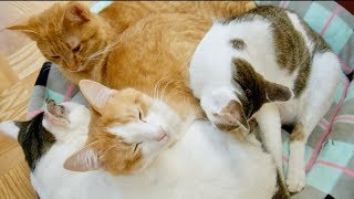 おしくらまんじゅう状態で眠る4匹の猫