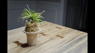 Neofinetia Falcata Collection: A Repotting Video + Mini Update