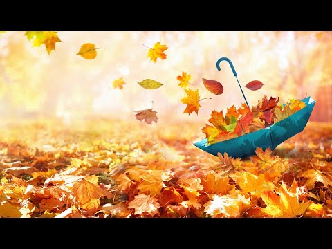 가을 속 감미로운 아침음악 3시간 🎵 힐링음악, 요가음악, 명상음악, 스트레스해소음악 (Autumn Life)