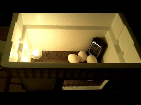 How to make a simple incubator for chicken eggs