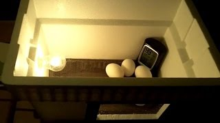 DIY $20 Egg Incubator - How To Make An Egg Incubator, CHEAP and EASY!!! thumbnail