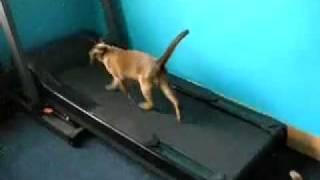 ржач!  Кошки на беговой дорожке!