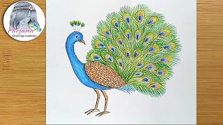 How to draw a Peacock step by step