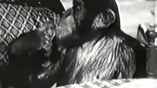 jungle jim 1955 a fortune in ivory part 1