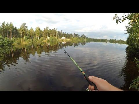 Ловля щуки на лесном озере