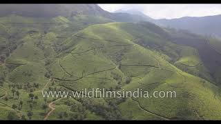 Munnar : fly over tea gardens and shola forests in Kerala