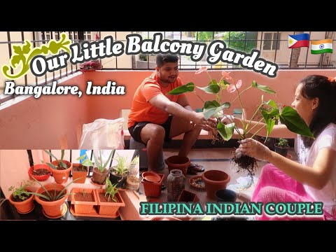 LIVING IN AN APARTMENT IN BANGALORE, INDIA.. BALCONY GARDEN   Filipina Indian couple🇵🇭🇮🇳
