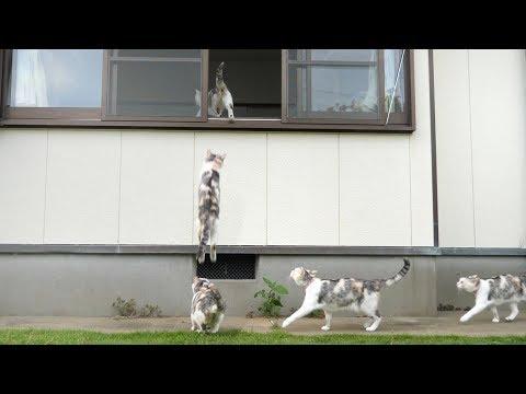 三毛猫姉さんの華麗なるスーパージャンプ!