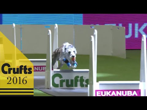 Flyball - Team - Quarter Finals | Crufts 2016