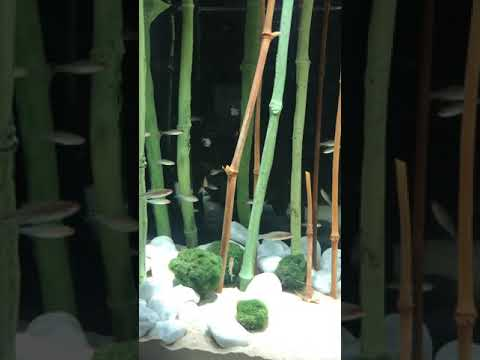 Realistic Bamboo Aquarium Decoration - Aquadecor Backgrounds