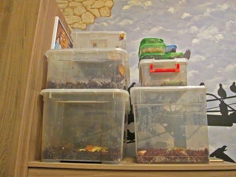 Моя коллекция сухопутных и аквариумных улиток.
