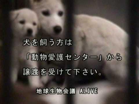 犬の殺処分/ALIVE映像