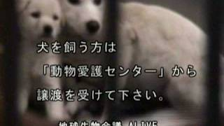 Repeat youtube video 犬の殺処分/ALIVE映像