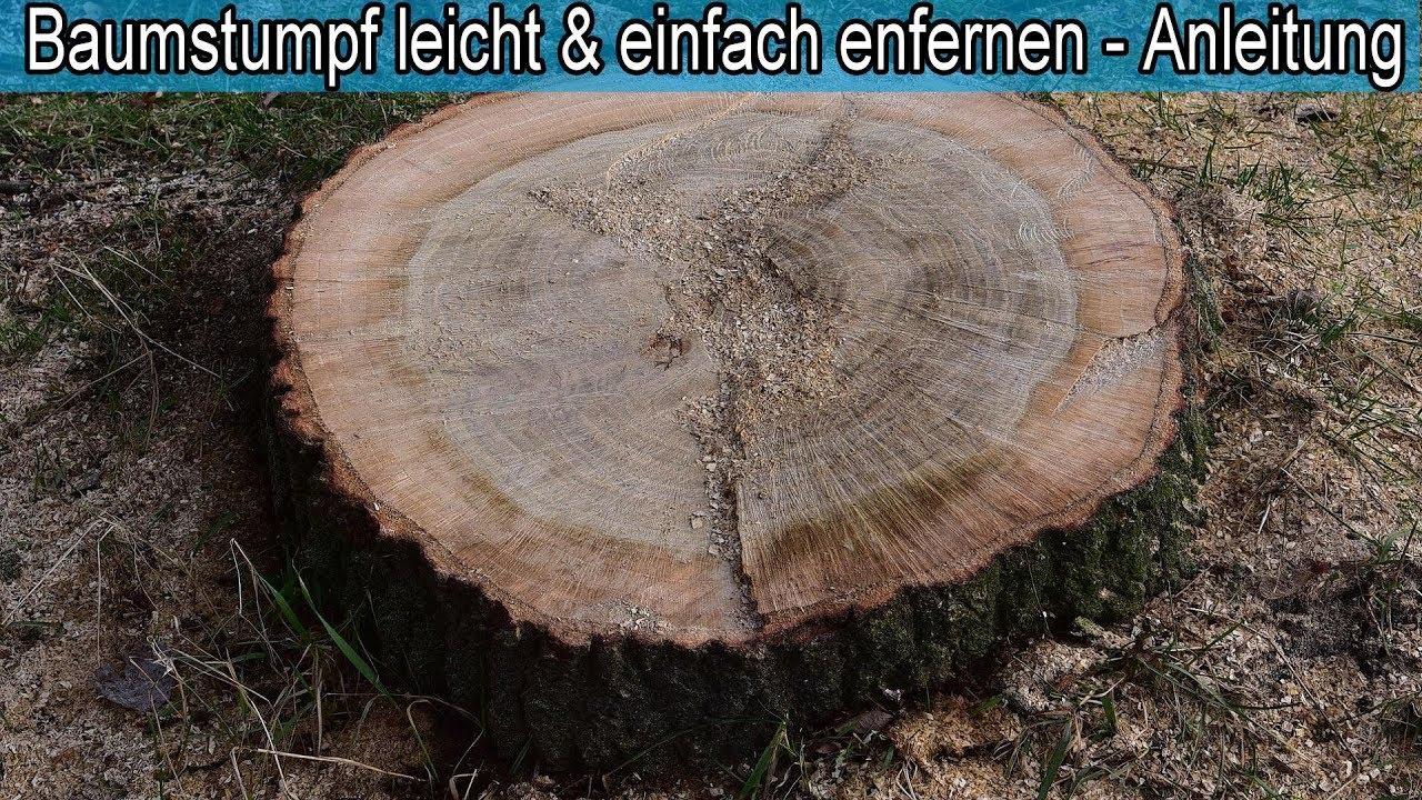 Berühmt Großen Baumstumpf mit Wurzel mühelos & einfach entfernen – Tipps #PW_43