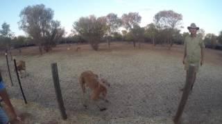 Visit of the Kangaroo Sanctuary (2016)