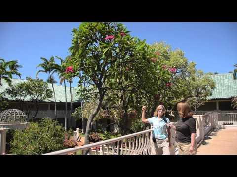 Tropical Gardens At Four Seasons Lanai At Manele Bay