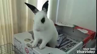 토끼,애완동물,애완동물 추천,애완동물 소개,애완동물 키…