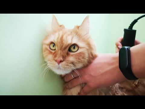 Вопрос: Можно ли подстричь кошку обычной машинкой для стрижки волос?