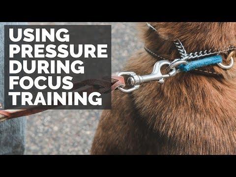 Using Pressure During Focus Training