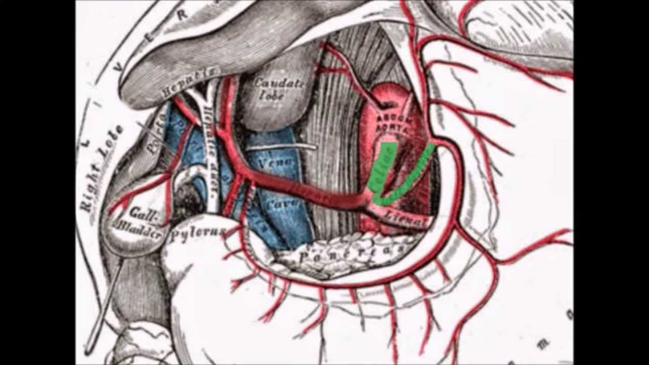 aorta abdominal (leer descripcion) - YouTube