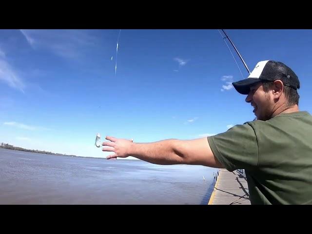 Río Parana , pesca al vuelo, mucho pique!!!!!! - Pablo Kozlowsky