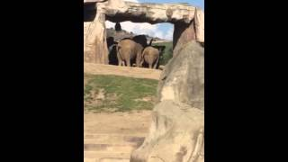 Elephants have sex at zoo