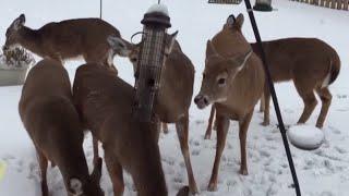 NICE, RON! Sneezing Guy Scares Away Deer | What's Trending Now