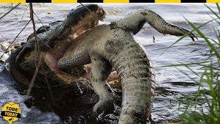 🔴 R.ợ.n Tóc Gáy Với 10 Loài Động Vật Ăn T.h.ị.t Đ.ồ.n.g L.o.ạ.i M.á.u Lạnh Nhất Thế Giới Này