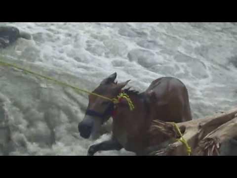 Disaster At Kedarnath