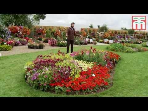 Brighten your garden with some Annual Bedding plants