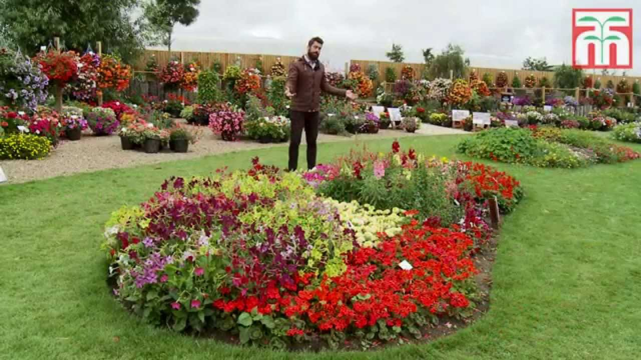 Brighten Your Garden With Some Annual Bedding Plants Youtube