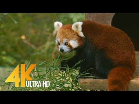 Wild Animals in Ljubliana ZOO in 4K | 1.5 Hour Relax Video with Floating Music