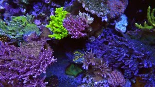 World Wide Corals Store Tour Orlando, FL Aquarium Superstore
