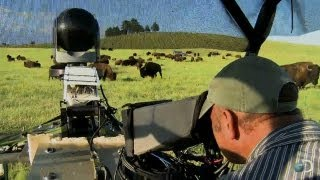 Filming Bison From an ATV | North America