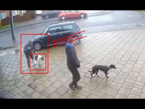 Shocking CCTV Video- Footage of owner failing to clean up dog poo