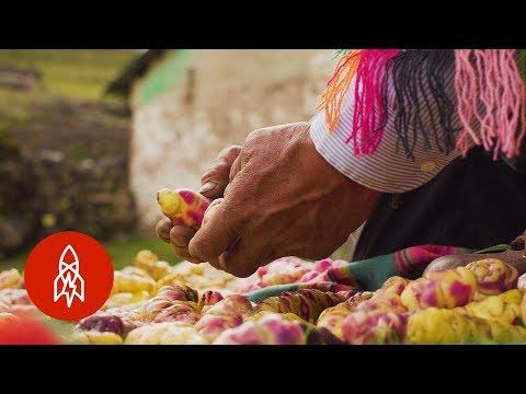 This Peruvian Farmer Grows Over 400 Varieties of Potatoes
