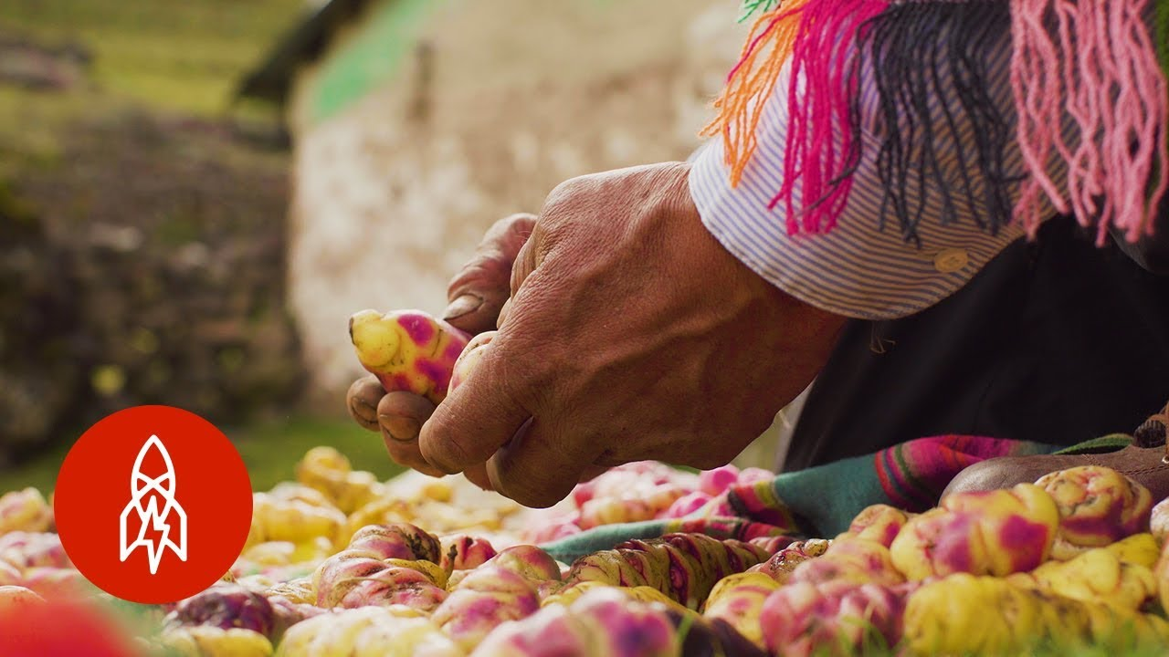This Peruvian Farmer Grows Over 400 Varieties of Potatoes