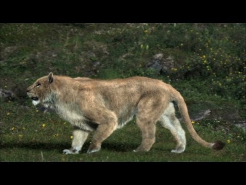 Cave Lion Vs Cave Bear - Ice Age Giants - Episode 2 Preview - BBC Two