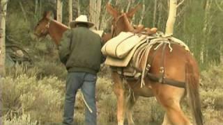 USFS - Pack Mule Program