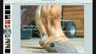 caudal heel pain in horses a horsetalk webcast of the horse s advocate and geoff tucker dvm