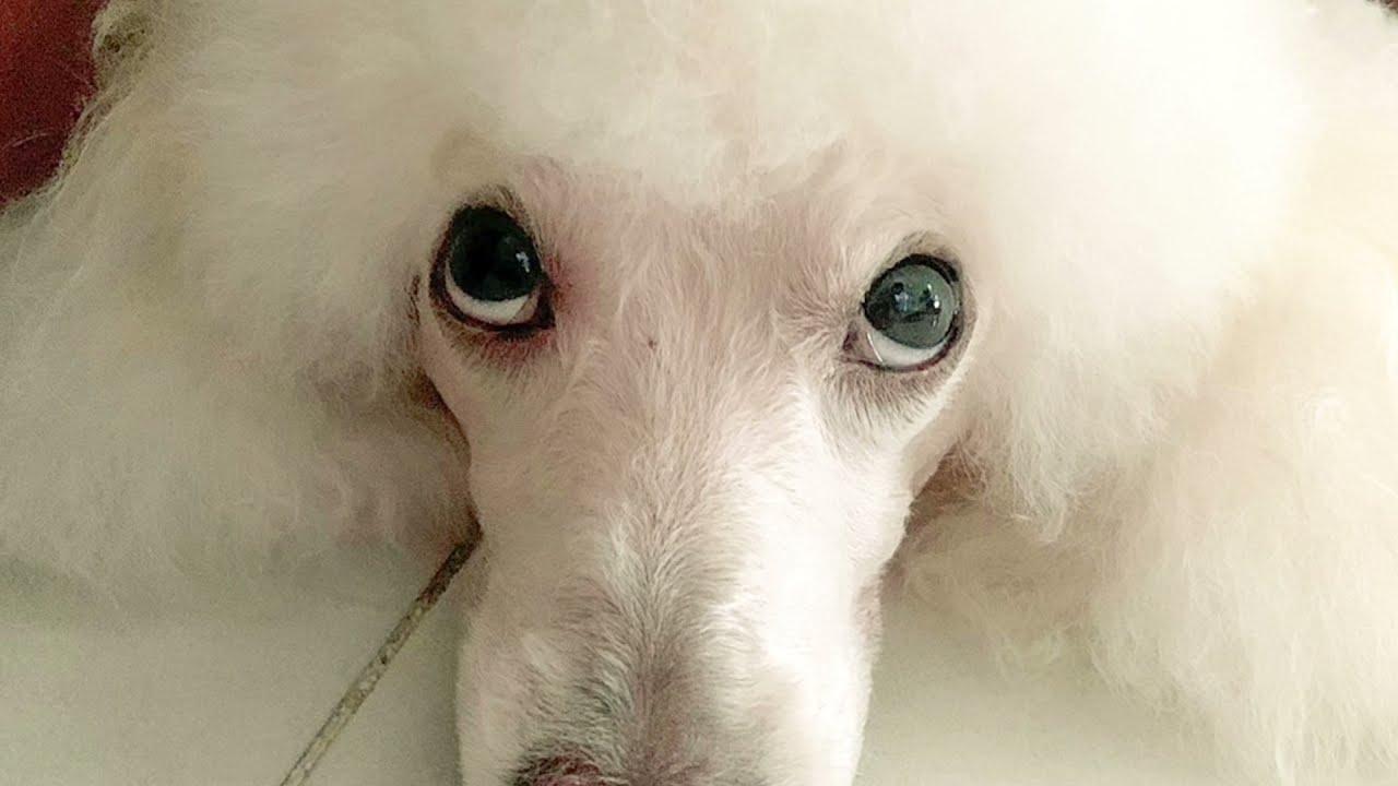 เคสน้องลาเต้ หมาวิตกจริต ตื่นตระหนก หางสั่นแบบงูหางกระดิ่งเป็นยังไง ทำไมครูโจโดนหมากัด