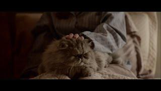 cat chow orgulhogato